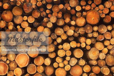 Stack of Wood Stock Photo - Rights-Managed, Image code: 700-01788636
