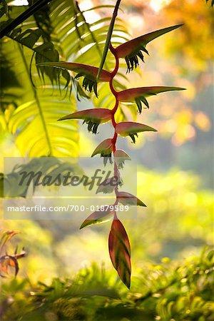 Close-up of Foliage in Singapore Botanical Gardens, Singapore
