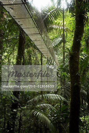 Bridge Through Rainforest, La Fortuna, Alajuela Province, Costa Rica