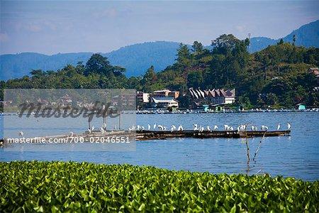 Fish Farms by Shoreline, Lake Toba, Samosir Island, Sumatra, Indonesia