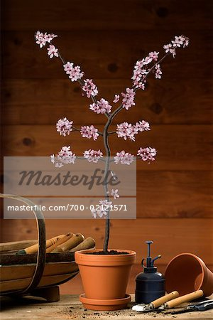 Potted Plant Blossoming into Yen Sign Stock Photo - Rights-Managed, Image code: 700-02121571