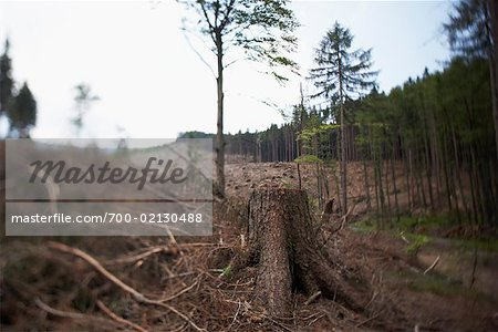 Deforestation, Harz National Park, Saxony-Anhalt, Germany Stock Photo - Rights-Managed, Image code: 700-02130488