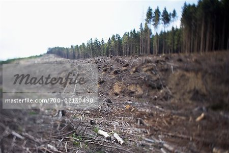 Deforestation, Harz National Park, Saxony-Anhalt, Germany Stock Photo - Rights-Managed, Image code: 700-02130490