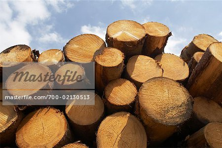 Stack of Lumber, Harz National Park, Saxony-Anhalt, Germany Stock Photo - Rights-Managed, Image code: 700-02130513