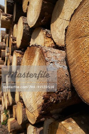 Stack of Lumber, Harz National Park, Saxony-Anhalt, Germany Stock Photo - Rights-Managed, Image code: 700-02130514