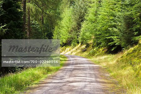 Logging Trail Through Forest, Whinlatter Forest Park, Lake District, Cumbria, England Stock Photo - Rights-Managed, Image code: 700-02260056