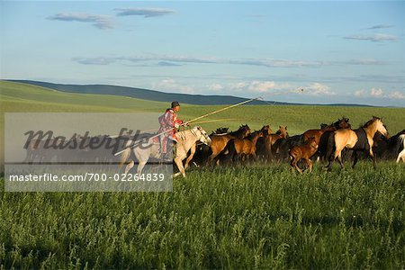 Horseman Herding Horses, Inner Mongolia, China Stock Photo - Rights-Managed, Image code: 700-02264839