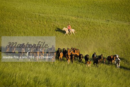 Horseman Herding Horses, Inner Mongolia, China Stock Photo - Rights-Managed, Image code: 700-02264842