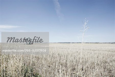Pump Jack in Prairie Field, Alberta, Canada Stock Photo - Rights-Managed, Image code: 700-02377936