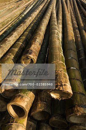 Bamboo, Guilin, China Stock Photo - Rights-Managed, Image code: 700-02385940