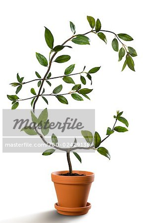 Euro-Shaped Plant Growing in Pot Stock Photo - Rights-Managed, Image code: 700-02429138