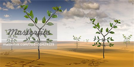 Yen-Shaped Plants Growing in the Desert Stock Photo - Rights-Managed, Image code: 700-02429139