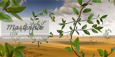 Euro-Shaped Plants Growing in the Desert Stock Photo - Rights-Managed, Image code: 700-02429142