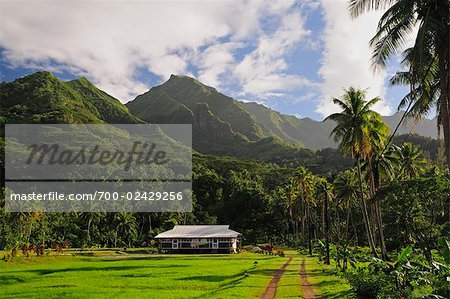 Farm Near Mt Oropiro, Raiatea, Society Islands, French Polynesia South Pacific Stock Photo - Rights-Managed, Image code: 700-02429256