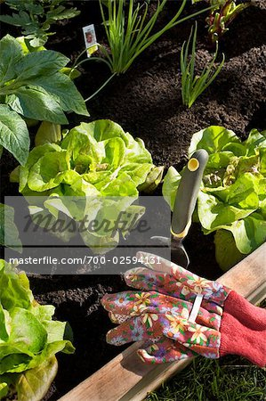 Organic Vegetable Garden Stock Photo - Rights-Managed, Image code: 700-02594131