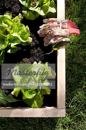 Organic Vegetable Garden Stock Photo - Rights-Managed, Image code: 700-02594132