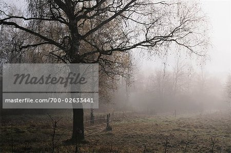 Tree by Field, Schwenninger Moos, Villingen-Schwenningen, Baden-Wurttemberg, Germany Stock Photo - Rights-Managed, Image code: 700-02633441