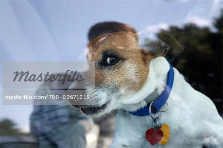 Dog Looking Out Car Window Stock Photo - Rights-Managed, Image code: 700-02671015