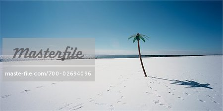 Plastic Palm Tree in the Snow, Coney Island, New York, USA Stock Photo - Rights-Managed, Image code: 700-02694096