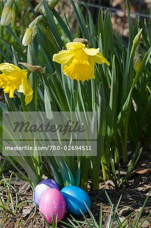 Daffodils and Easter Eggs Stock Photo - Rights-Managed, Image code: 700-02694511