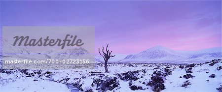 Dead Tree on Rannoch Moor in Winter at Dawn, Highlands, Scotland Stock Photo - Rights-Managed, Image code: 700-02723156