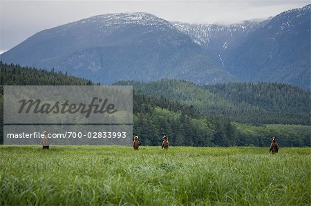Mother Grizzly with Cubs in Sedge, Glendale Estuary, Knight Inlet, British Columbia, Canada Stock Photo - Rights-Managed, Image code: 700-02833993