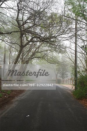 Tree-lined Street in the Morning Stock Photo - Rights-Managed, Image code: 700-02922842