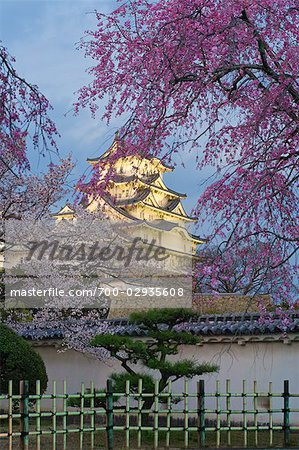 Cherry Tree, Himeji Castle, Himeji, Japan Stock Photo - Rights-Managed, Image code: 700-02935608
