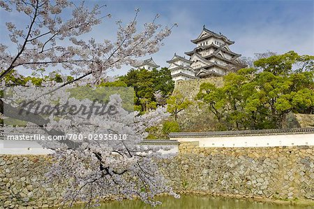 Cherry Tree, Himeji Castle, Himeji, Japan Stock Photo - Rights-Managed, Image code: 700-02935610