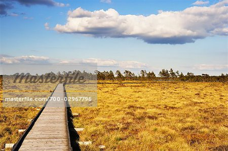Boardwalk, Store Mosse National Park, Sweden Stock Photo - Rights-Managed, Image code: 700-02967796