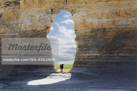 Cow Looking Through Arch, Monument Rocks, Gove County, Kansas, USA Stock Photo - Rights-Managed, Image code: 700-03017674