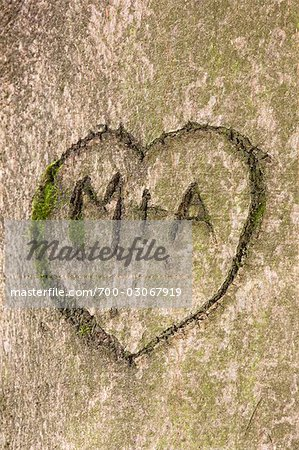 Initials and Heart in Tree Trunk Stock Photo - Rights-Managed, Image code: 700-03067919