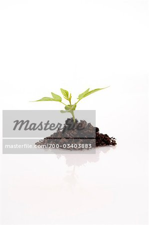Still Life of Seedling Stock Photo - Rights-Managed, Image code: 700-03403883