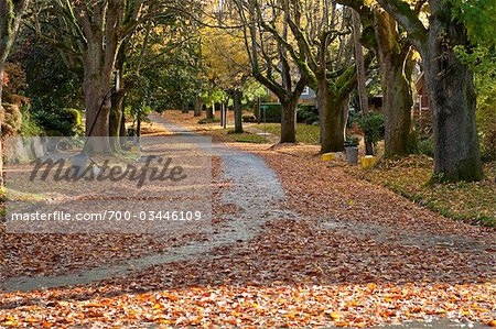 Street in Autumn, Oregon, USA Stock Photo - Rights-Managed, Image code: 700-03446109
