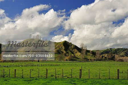 Farmland near Frasertown, Hawke's Bay, North Island, New Zealand Stock Photo - Rights-Managed, Image code: 700-03508402