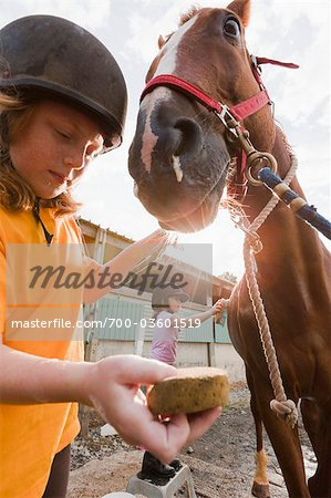 Girls Cleaning Horse Stock Photo - Rights-Managed, Image code: 700-03601519