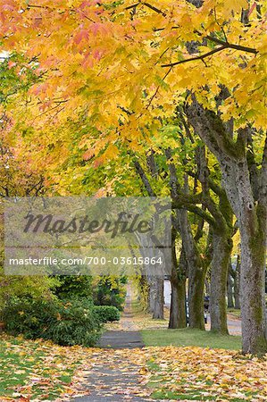 Autumn, 13th Avenue, West Point Grey, Vancouver, British Columbia Stock Photo - Rights-Managed, Image code: 700-03615864