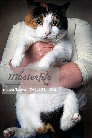 Woman Holding Overweight Cat Stock Photo - Rights-Managed, Image code: 700-03644662