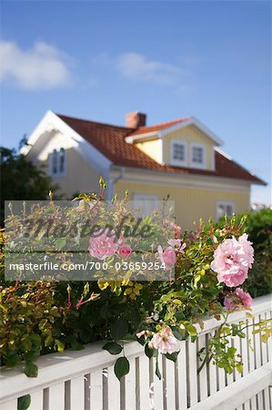 Roses and White Fence in front of House Stock Photo - Rights-Managed, Image code: 700-03659254