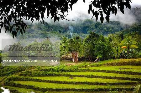 Rice Terraces. Lapale, Sumba, Indonesia Stock Photo - Rights-Managed, Image code: 700-03665824