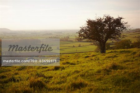Overview of Farmland, Somerset, England, United Kingdom