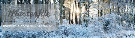 Woodland at Sunrise after Snow Fall, Dorset, England Stock Photo - Rights-Managed, Image code: 700-03768721