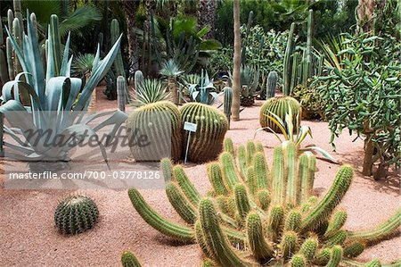 Cacti at Jardin Majorelle, Marrakech, Morocco Stock Photo - Rights-Managed, Image code: 700-03778126
