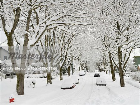 Fresh Snowfall, Dunbar-Southlands Neighbourhood, Vancouver, British Columbia, Canada Stock Photo - Rights-Managed, Image code: 700-03805569