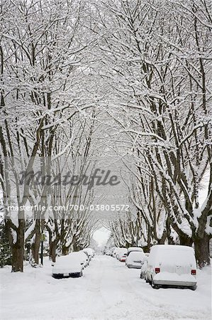 Fresh Snowfall, Dunbar-Southlands Neighbourhood, Vancouver, British Columbia, Canada Stock Photo - Rights-Managed, Image code: 700-03805572