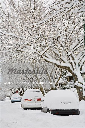 Fresh Snowfall, Dunbar-Southlands Neighbourhood, Vancouver, British Columbia, Canada Stock Photo - Rights-Managed, Image code: 700-03805574