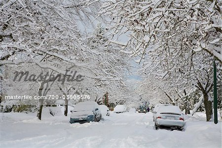 Fresh Snowfall, Dunbar-Southlands Neighbourhood, Vancouver, British Columbia, Canada Stock Photo - Rights-Managed, Image code: 700-03805576