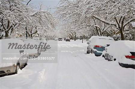 Fresh Snowfall, Dunbar-Southlands Neighbourhood, Vancouver, British Columbia, Canada Stock Photo - Rights-Managed, Image code: 700-03805577