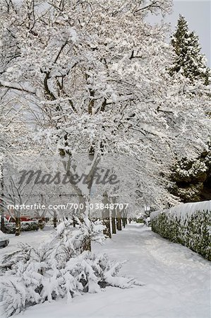 Fresh Winter Snowfall in Dunbar-Southlands Neighbourhood, Vancouver, British Columbia, Canada Stock Photo - Rights-Managed, Image code: 700-03848707