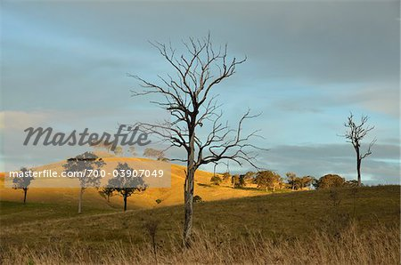 Countryside near Dungog, New South Wales, Australia Stock Photo - Rights-Managed, Image code: 700-03907049